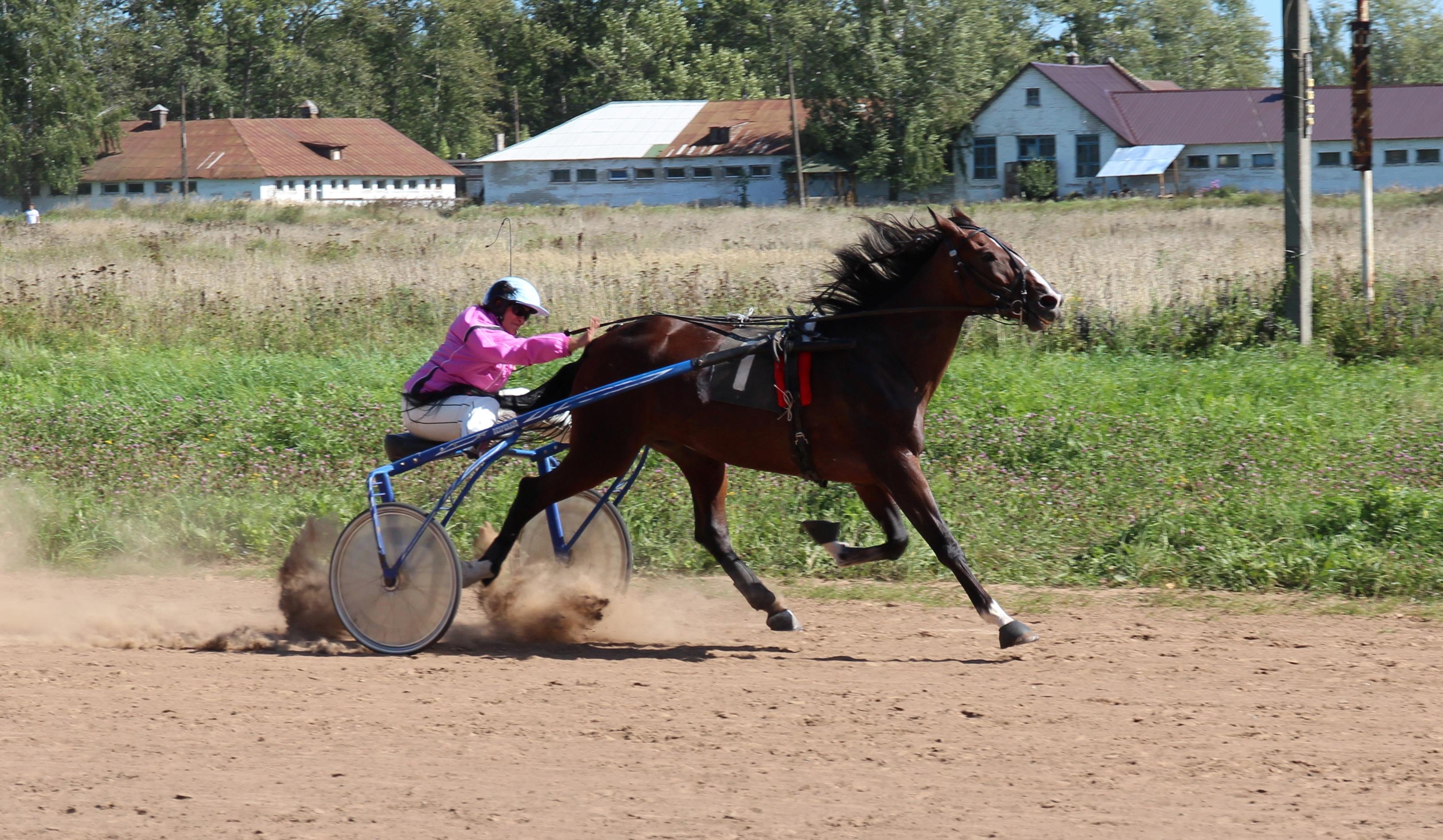 Наездницы на лошадях фото 5