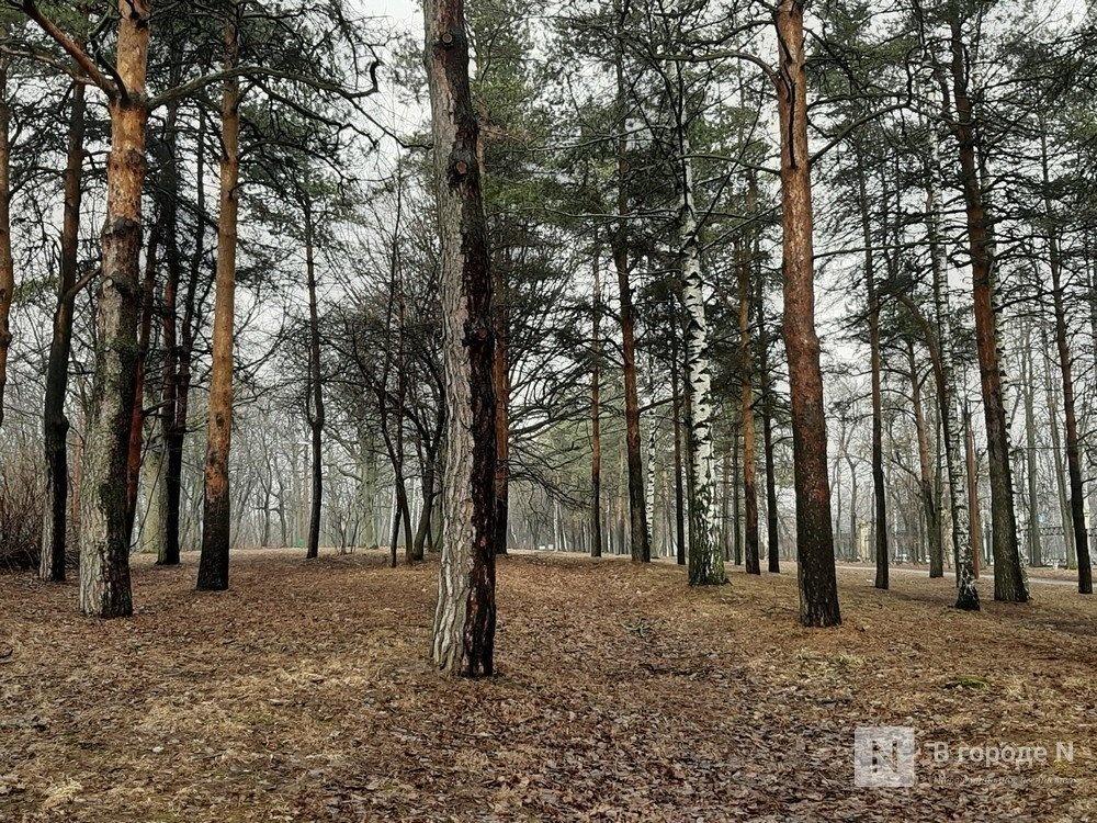 Деревья в парке «Швейцария» вылечат с помощью «искусственной коры» - фото 1