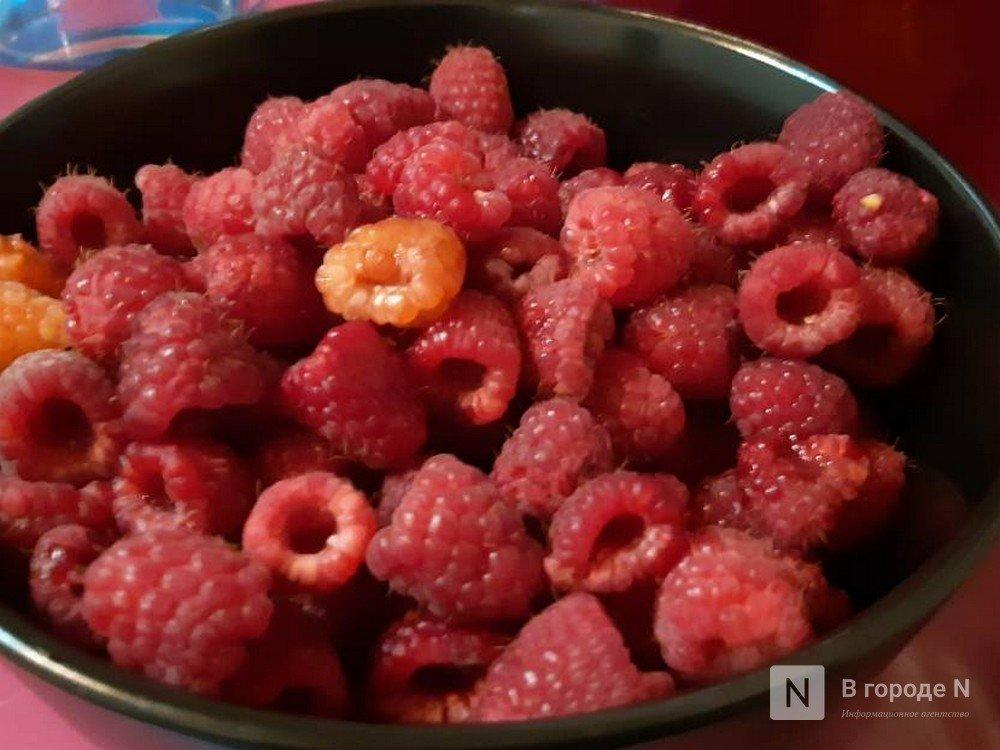 Инвестсоглашения на выращивание ягод, овощей и конопли одобрили нижегородские депутаты - фото 1
