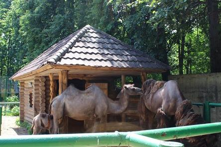 Детские площадки устанавливают на месте зоопарка «Мишутка» в парке «Швейцария»