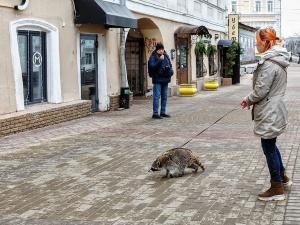 С енотом на поводке прогулялась нижегородка по Рождественской