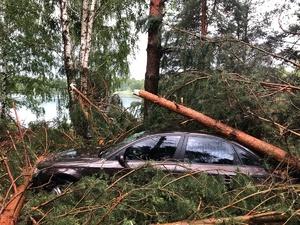 Деревья погребли под собой машины из-за бури в Богородском районе