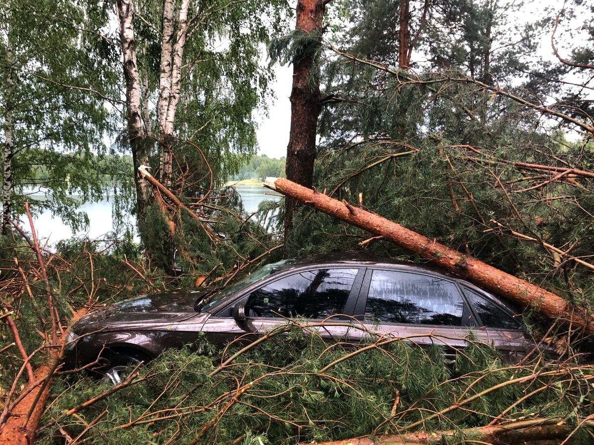 Деревья погребли под собой машины из-за бури в Богородском районе - фото 1