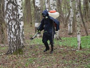 Нижегородские парки обработают от клещей к середине июня
