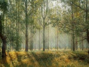 Опасные бабочки из Марий Эл угрожают нижегородским лесам