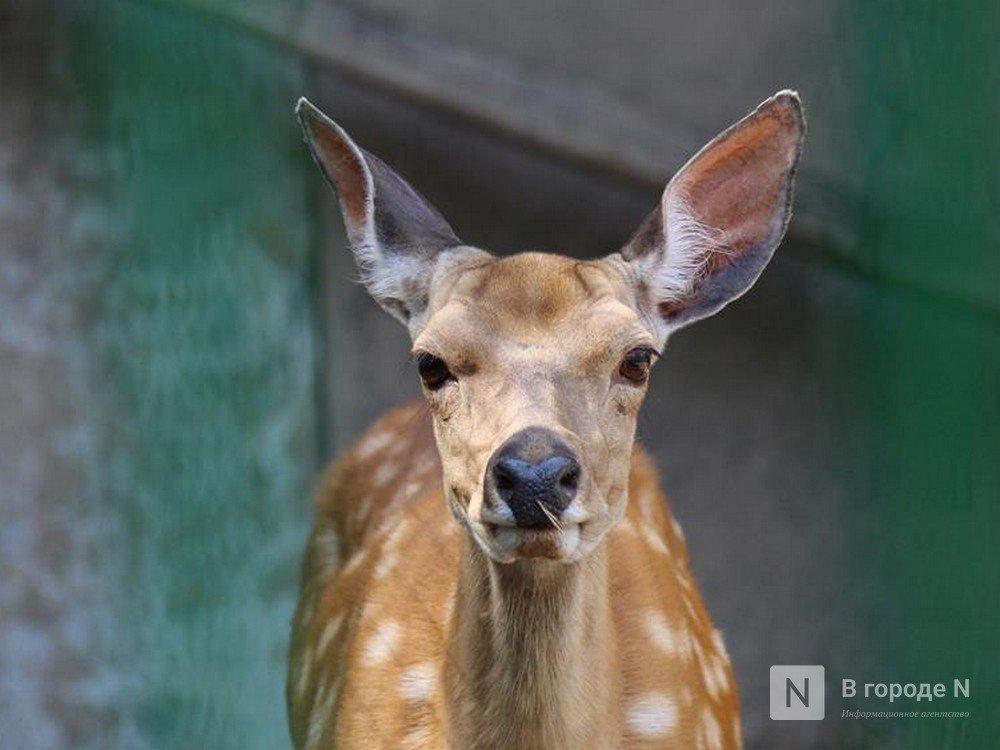 Нижегородский зоопарк «Мишутка» распродает животных - фото 1