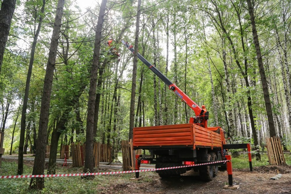 Более 1 600 деревьев посадят в парке «Швейцария» взамен аварийных - фото 1