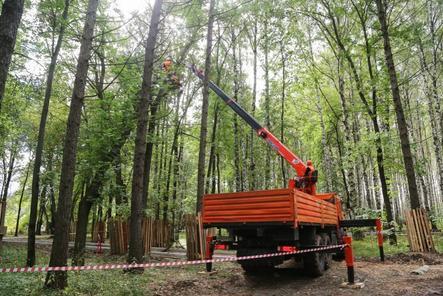 Более 1 600 деревьев посадят в парке «Швейцария» взамен аварийных
