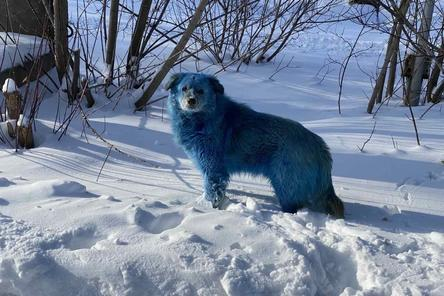 Голубые собаки в Дзержинске