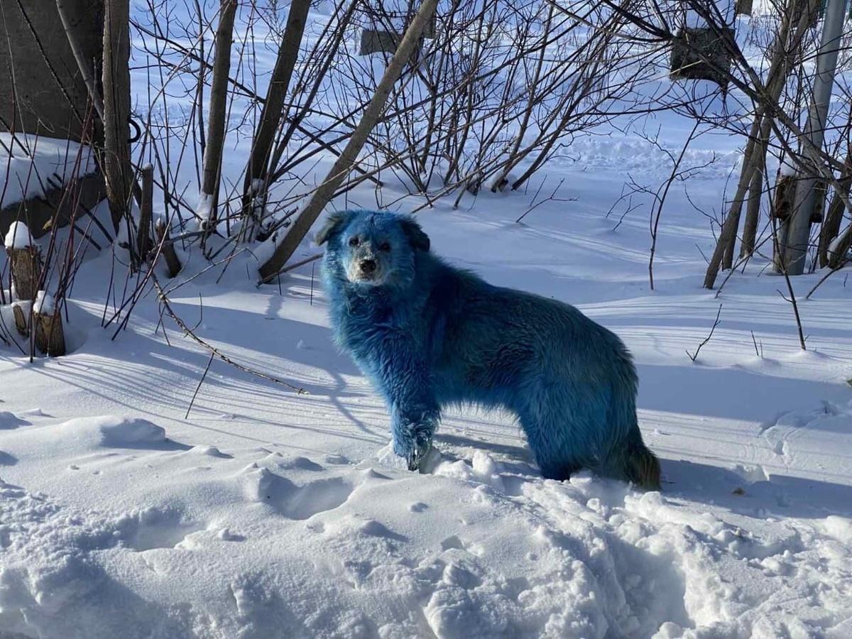 Очевидец встретился со стаей голубых собак на территории завода «Оргстекло» в Дзержинске - фото 1