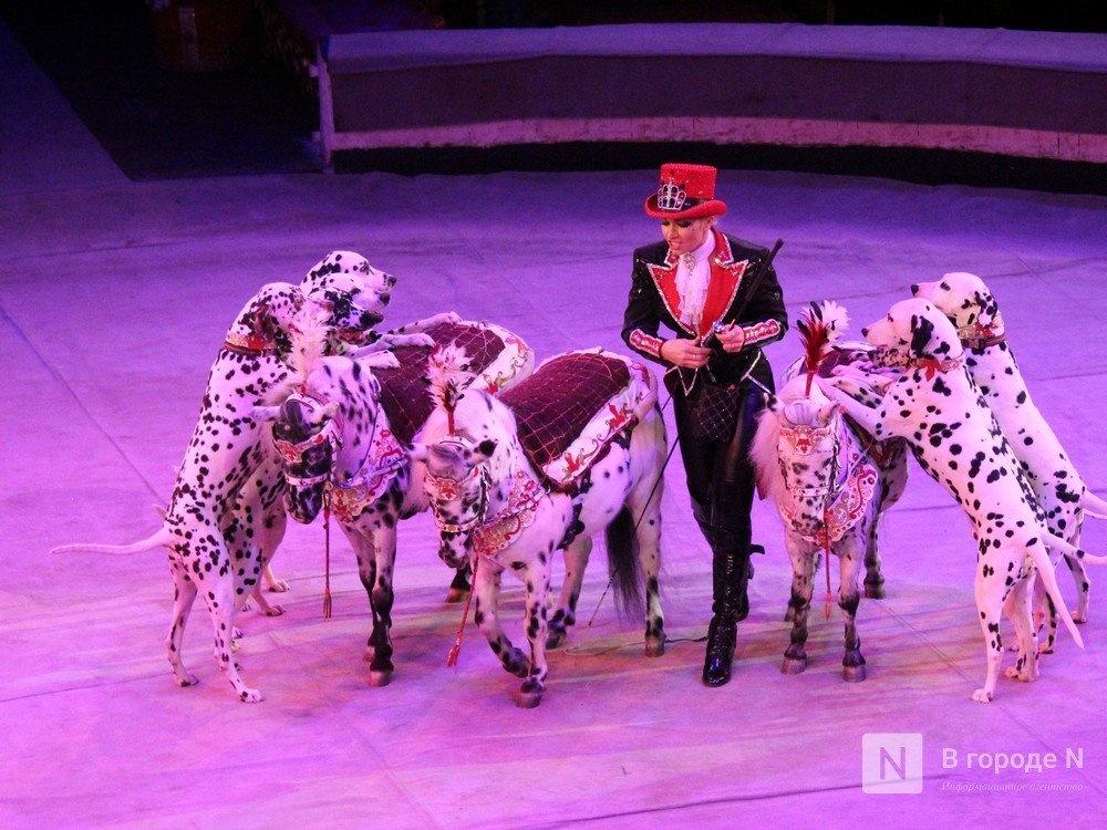 Животные из цирка Гии Эрадзе застряли в Нижнем Новгороде из-за пандемии - фото 1