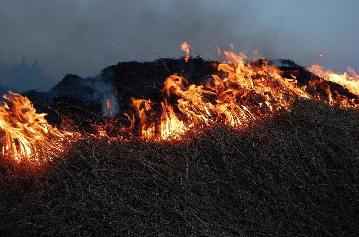 Площадь пожаров из-за сухостоя повысилась в Нижегородской области почти в 25 раз в 2019 году - фото 1