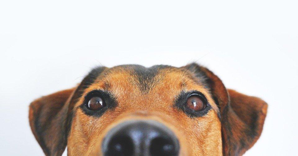 Какие домашние животные чаще всего вынуждают своих хозяев делать ремонт в квартире - фото 2