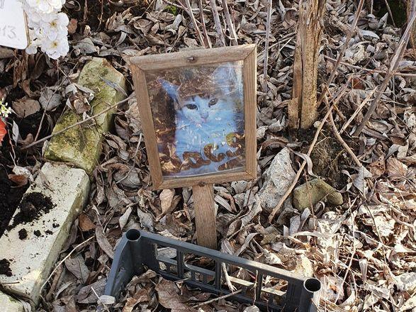 Православный крест над котом: где находится нижегородское кладбище домашних животных - фото 15