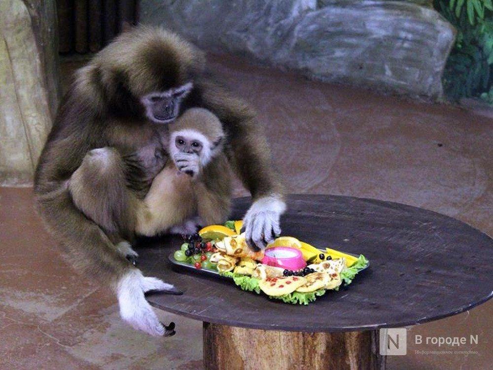 Полтора миллиона рублей на корм для животных выделят двум нижегородским зоопаркам - фото 1