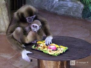 Полтора миллиона рублей на корм для животных выделят двум нижегородским зоопаркам