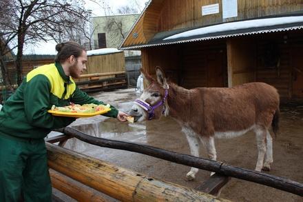Звериная Масленица: обитателей нижегородского зоопарка угостили блинами
