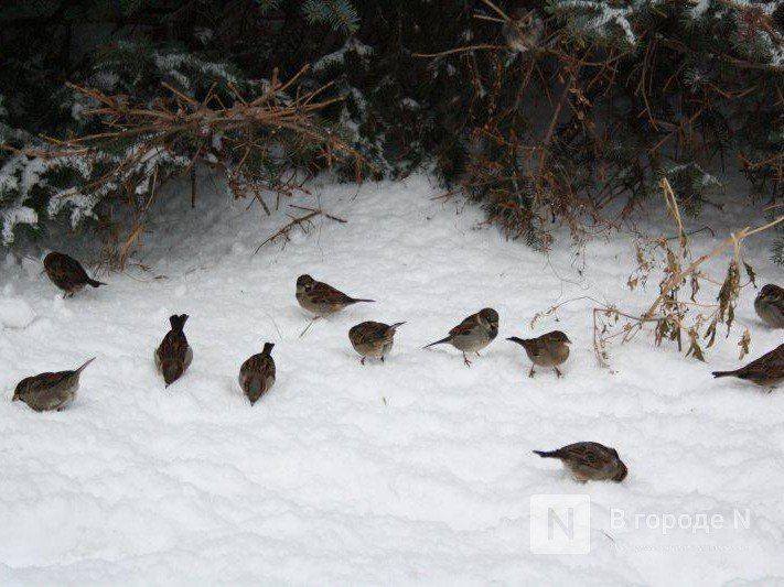 Дожди и снегопады ждут нижегородцев в выходные - фото 1