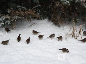«Температурные качели» от +2°С до -7°С ждут нижегородцев на этой неделе