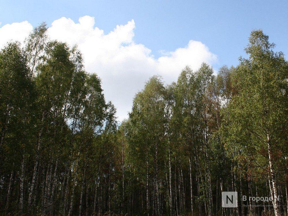 Леса Нижнего Новгорода поставят на учет - фото 1
