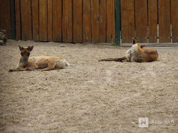 Выжить в пандемию: что происходило в закрытом зоопарке «Лимпопо» - фото 25