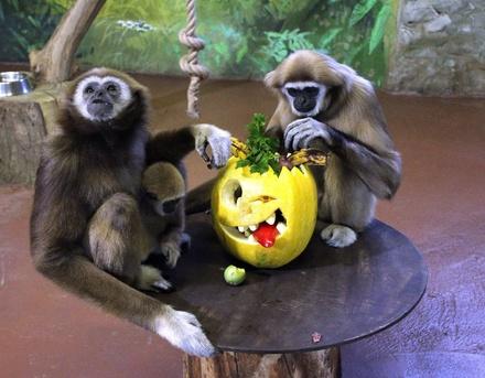 Всем по тыкве: обитатели нижегородского зоопарка отметили Хэллоуин