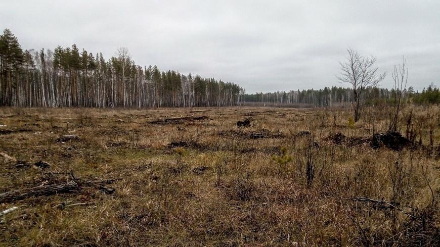Предприниматель из Ветлуги незаконно вырубил лес на 2,5 млн рублей - фото 1